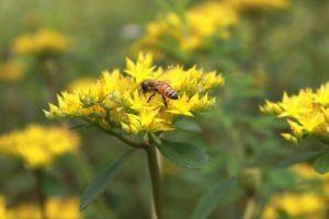 Werde ein BienenBürger! @ Ev. Familien-Bildungsstätte Raum E1
